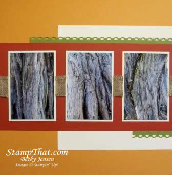 tree bark pictures