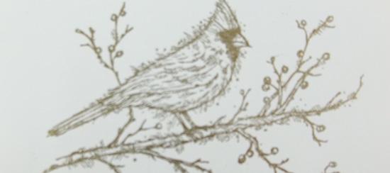 Cardinal Beauty Christmas Card